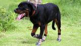 Qualitäts-geschobener wasserdichter großer Antihund bereift Socken