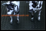 Esteira da vaca, anti esteira do enxerto, esteira de borracha quadrada pequena