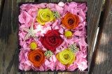 El vástago largo de las flores frescas del precio bajo preservó la flor de China
