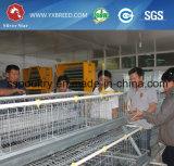 Südamerikanisches automatisches Huhn-Geflügel-Gerät für Schichten und Bratrost