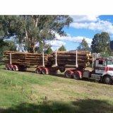 2つの車軸強いポストの輸送の木製のログのトレーラー