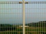 Qualitäts-doppelter Schleifen-Zaun Fabrik in der Anping-Tianshun