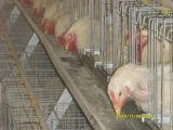 a-Type и h - напечатайте клетки на машинке батареи пользы типа и цыпленка клетки