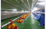 Fabricado na China automática de alta qualidade Tipo de Controle Ambiental Casa de frango com equipamentos de aves de capoeira (XGZ-GR019)
