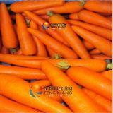 Моркови, турнепсы, Radishs Peeler, машина шелушения Mstp-80