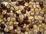 최고 질에 의하여 통조림으로 만들어지는 전체적인 표고 버섯