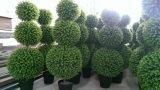 녹색 벽 장신구 M 파란 공 인공적인 회양목 잔디밭 공