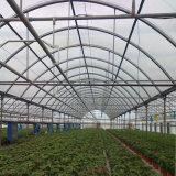 Chambre verte galvanisée de systèmes hydroponiques de feuille de PC de bâti en acier