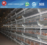 Migliore gabbia della rete metallica di qualità per l'azienda agricola di strato del pollo nel Kenia