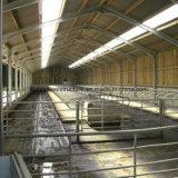 販売のために取除かれるStrucureプレハブの鋼鉄牛