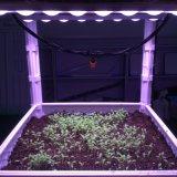 O diodo emissor de luz cresce a barra clara para o cultivo das plantas internas