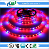 La pianta coltiva il nastro della striscia light/LED di SMD5050 660nm/450nm/470nm LED con 180°