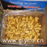Karton, der neuen Ingwer-China-Ursprung packt