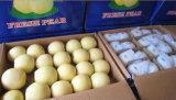 Pera dorata di nuova alta qualità di stagione/pera della parte superiore