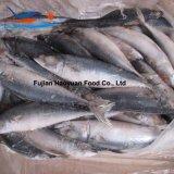 Fabrication Frozen Seafood Pacific Mackerel