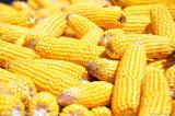 La farine de gluten de maïs Prix d'Livestocks