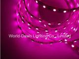 Indicatore luminoso dentellare di colore LED Sstrip con Ce & la certificazione di RoHS