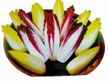 Высокий инулин выдержки корня цикория Qualiti
