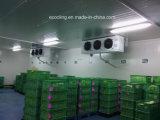 Alimento frío modificado para requisitos particulares del almacén de la combinación tamaño pequeño para la custodia fresca