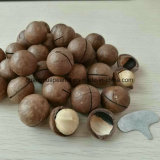 Venta caliente tamaño grande la tuerca de macadamia