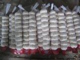 Aglio bianco normale cinese di buona qualità