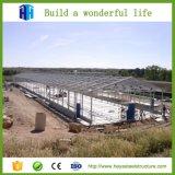 Niedrige Kosten-Stadiums-Licht-Stahlkonstruktion-Aluminiumgeflügel-Halle-Entwurf