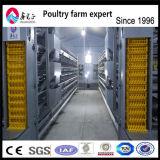 Matériel de ferme avicole de poulet de qualité à vendre