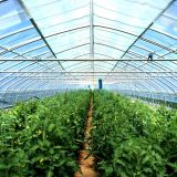 공장 직매를 가진 쉽게 설치된 농업 갱도 녹색 집