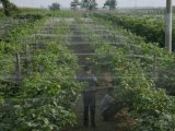 농업을%s 10*10mm HDPE 그물세공