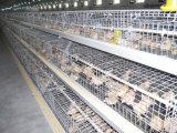 Ферма цыпленка цыплятины автоматизации новая арретирует окунутое после того как оборудование для малых цыпленоков горячих/холодов она гальванизирована (тип рамка)