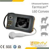 Machine à ultrasons à la chèvre porcine L60 Convex