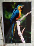 A3 impresora de cerámica de Digitaces de los colores de la talla 6