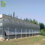 Één Systeem van de Serre van het Polycarbonaat van de Dienst van het Einde Stevig Hydroponic