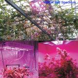 El LED crece ligero para las luces azules rojas de la planta de interior y el espectro completo hidropónico crece la lámpara