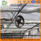 야채와 플랜트를 위한 구렁에 의하여 격리되는 건축 정면 유리제 온실