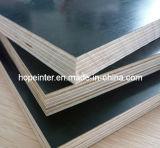 La película del álamo/del abedul/de la madera dura hizo frente a la madera contrachapada para Shuttering