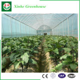 Vegetable를 위한 베스트셀러 Commercial 다중 Span Plastic Film Greenhouse