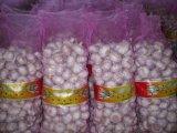 aglio bianco viola di 5.0cm con l'imballaggio del sacchetto