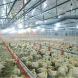 Matériel de volaille pour alimenter de poulet à rôtir