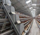 Ferme avicole automatique Système d'alimentation de la cage de poulet pour la couche de poulets de chair