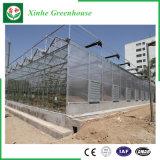 Invernadero multi de la hoja de la PC del palmo de la agricultura con el sistema del hidrocultivo en venta