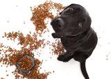 De gezonde Lijn van de Verwerking van het Voedsel van het Voer van de Vogel van de Kat van de Hond Vissen Gepufte