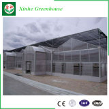 Estufa comercial do policarbonato da agricultura com sistema hidropónico