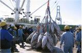 15 tonnellate di ghiaccio in pani che fa la macchina di fabbricazione ghiaccio/della pianta con la certificazione del Ce