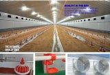 Ferme avicole professionnelle de grilleur de poulet de modèle