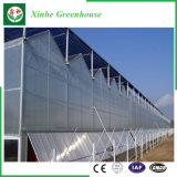 Niedrige Kosten Muti Überspannungs-Polygewächshaus mit Qualität für Gemüse