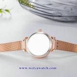 Tira de liga de malha Senhoras Quartz Relógios sabia, Senhora Assista (WY-17035B)