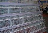 Цыплятина слоя клетки цыпленка фабрики Innaer для фермы цыпленка