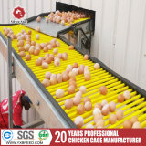 90 de la jaula de la capa de la capacidad de pollo