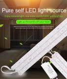 módulo de fuente ligero doble de la tira de color de 520m m LED /Illuminant/Optical